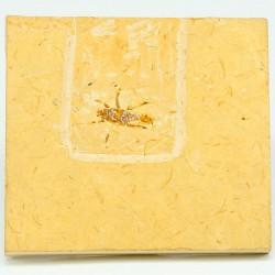 insecto fosil caliza