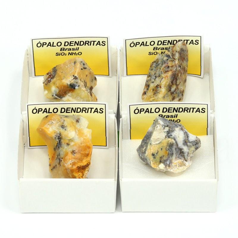 opalo dendritas