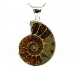 colgante ammonites frente