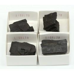 roca lignito