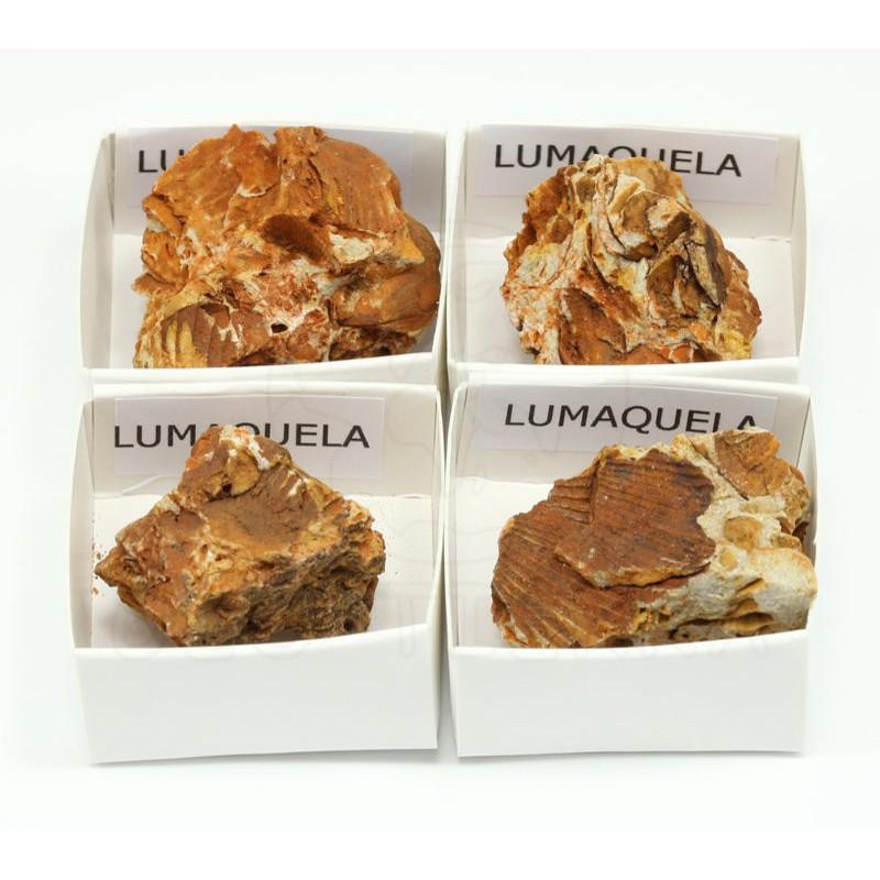 roca lumaquela