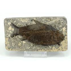 pez fosil china