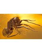 Ámbar con insectos